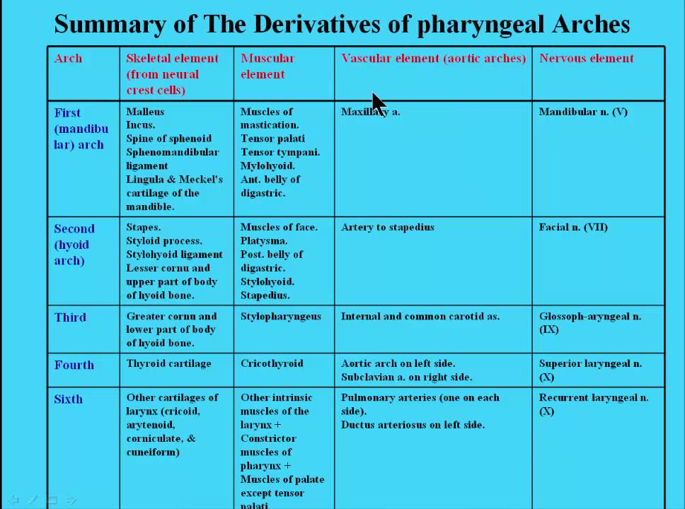 8 Summary of summary of The Derivatives of pharyngeal Arches - YouTube