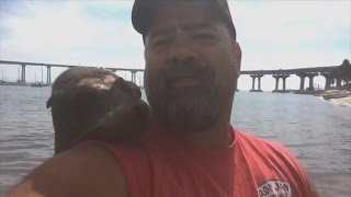 Friendly Seal Jumps on Fisherman's Back, Cuddles Up To Him and Won't Leave