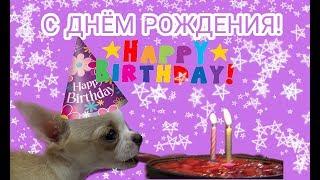 Щенок Лаки купил себе торт на День Рождение и пьёт молоко с бутылочки Puppy Lucky