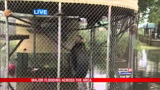 Repeat youtube video 4 animals drown at Alabama Gulf Coast Zoo