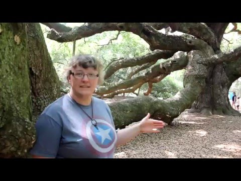 Charleston South Carolina | Angel Oak Tree Explore Johns Island