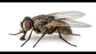 Śmieszne sytuacje z Live& 39 ow 1 Czemu ta mucha jest taka mała Bach nie żyje