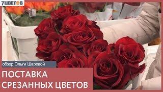 Поставка срезанных цветов   видеообзор с Ольгой Шаровой