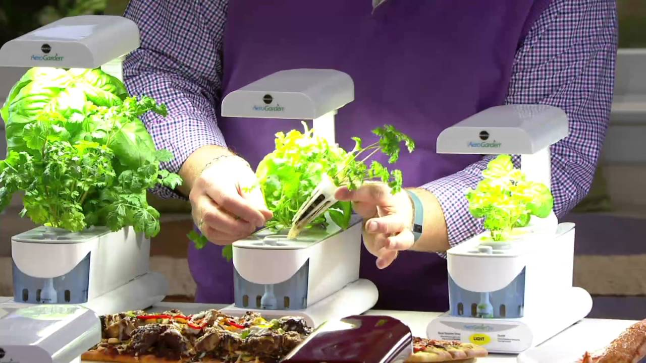 Miracle-Gro Aerogarden Sprout 3-Pod Garden with 6 Seed Pods on QVC