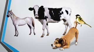 Загадки о домашних  животных +4