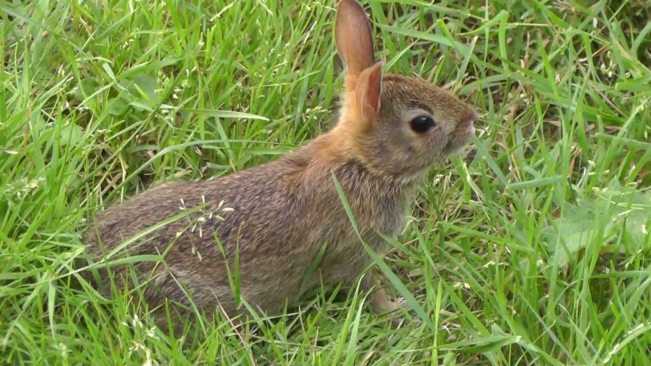 Wild Baby Bunnies - YouTube