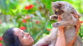 ജിജി ചേച്ചിയുടെ പേർഷ്യൻ പൂച്ചകൾ | Leo persian cat farm thrissur