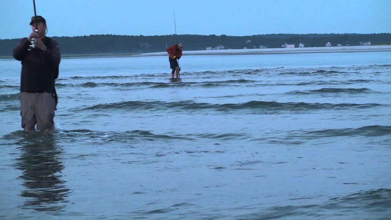 2 41 Inch Striped B Top Water Fishing Crane Beach Ipswich Ma 8 16 10 Fish On You