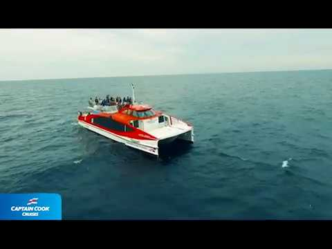 Sydney Whale Watching 2018 Captain Cook Cruises