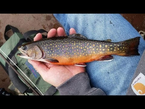 October 2017 Brook Trout FIshing In Maine