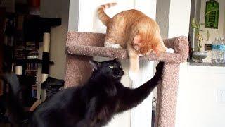 Cat vs Kitten - Cat Tree Battle! thumbnail