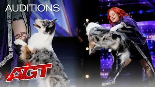 Adorable Dog Performs Incredible Tricks With Trainer  America's Got Talent 2020