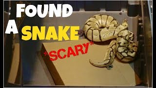 I FOUND A SNAKE IN MY HOUSE *it ESCAPED*