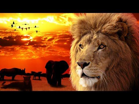 The Big Five Africa - amazing animals