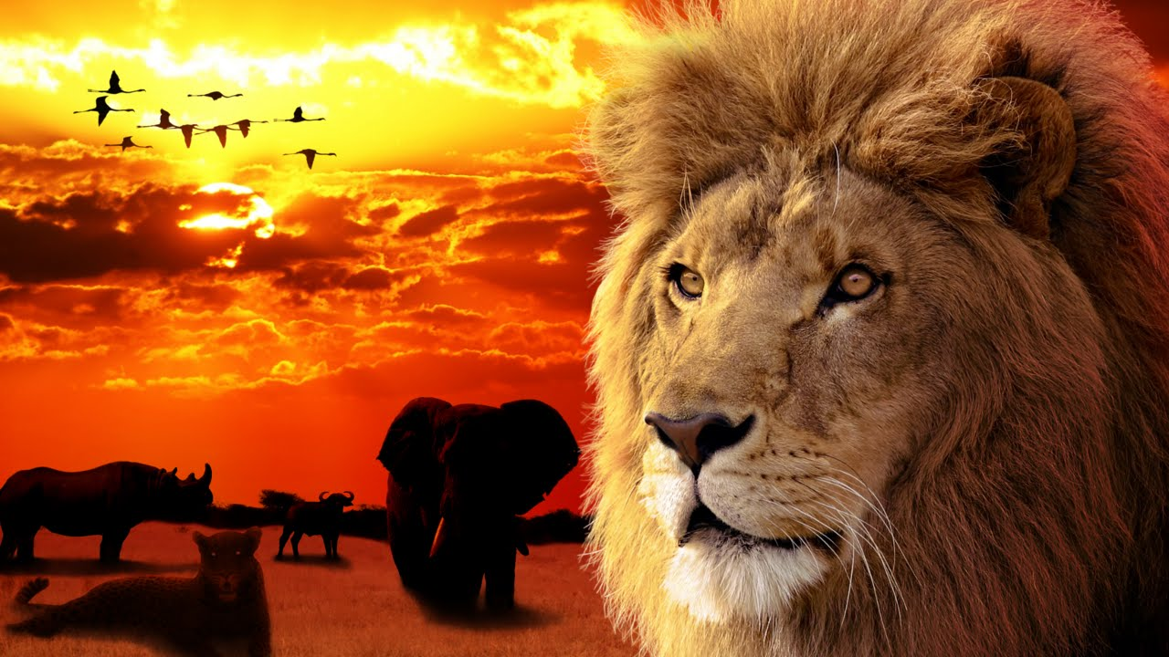 the big five africa amazing animals youtube. Black Bedroom Furniture Sets. Home Design Ideas