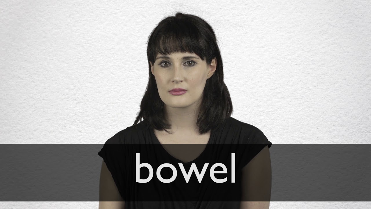 Bowel definition and meaning | Collins English Dictionary
