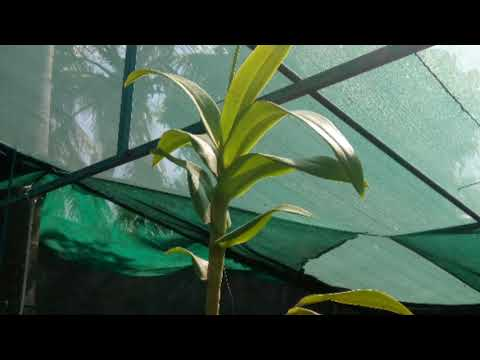 Garden Green Shade Net  In Services