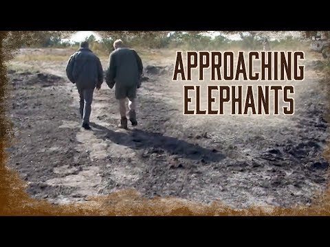 Locating Elephants And The Approach | 4