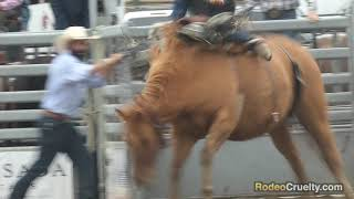San Dimas Rodeo Caught Shocking a Pregnant Horse