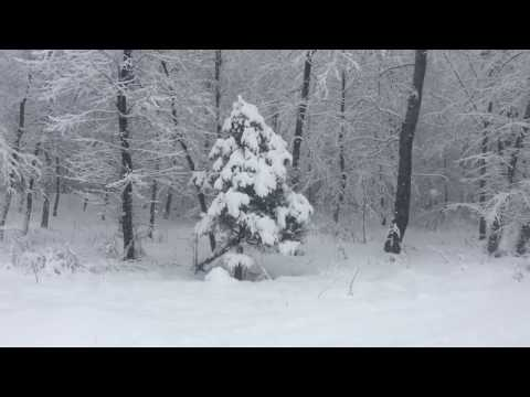 Видео: Дачадомашняя птица январские несушки