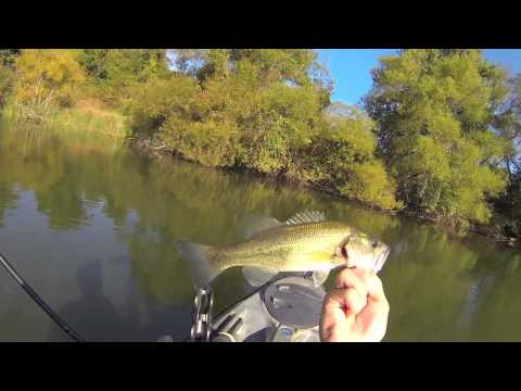 Bass on Teeny Torpedo