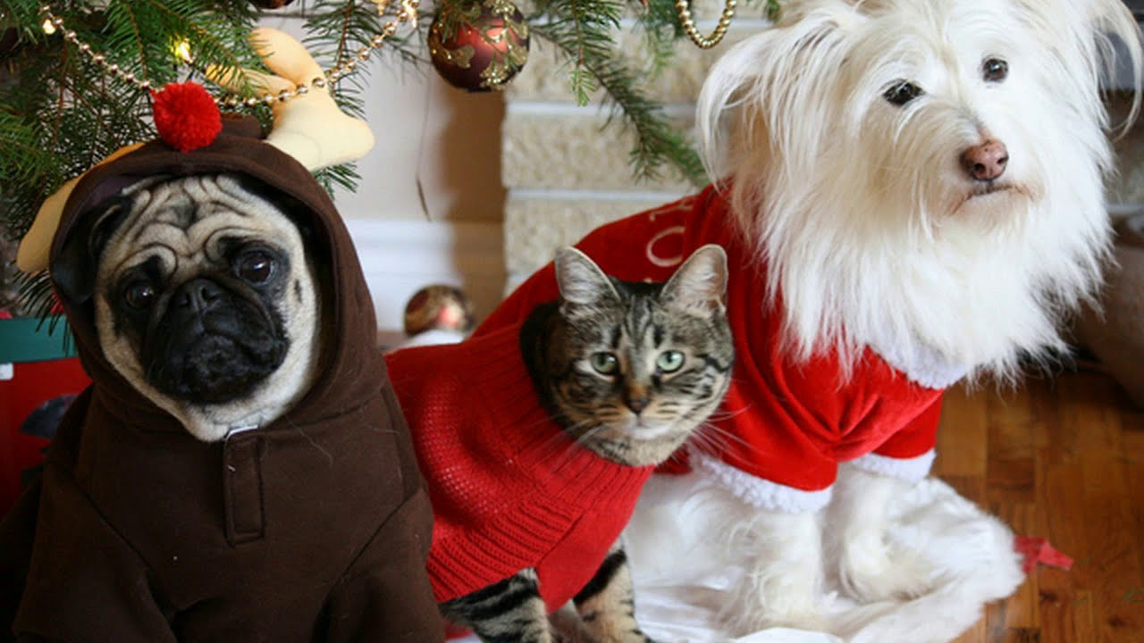 Cute Puppies Dressed Up For Christmas Youtube