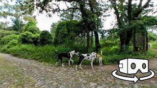 Perros en realidad virtual | Episodio #120