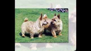 How To Potty Train Your Norwich Terriers  - Top 5 Tips On How To Potty Train Your Norwich Terriers