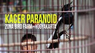 Video SUARA BURUNG : Kacer Paranoid Gacor Mantap Durasi Panjang download MP3, 3GP, MP4, WEBM, AVI, FLV April 2018