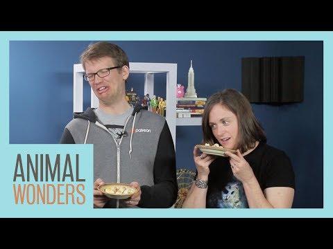 Animal Food Taste Test with Hank & Katherine Green