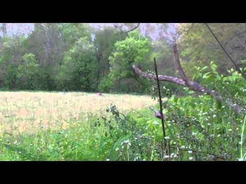 Turkey Hunting 2012.MP4