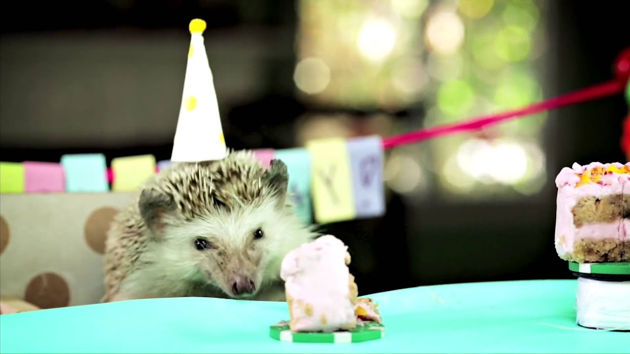 Tiny Birthday For A Tiny Hedgehog Ep 2 1080p Youtube