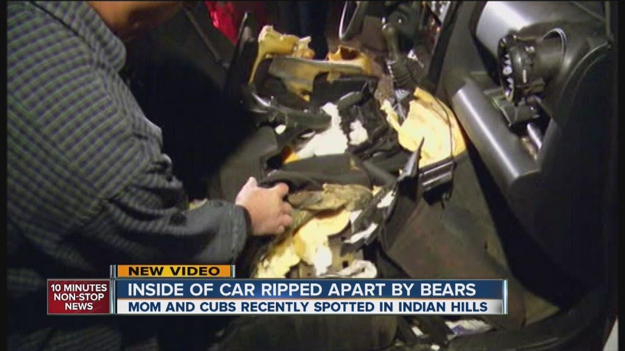 mama bear 2 cubs destroy family 39 s car youtube. Black Bedroom Furniture Sets. Home Design Ideas