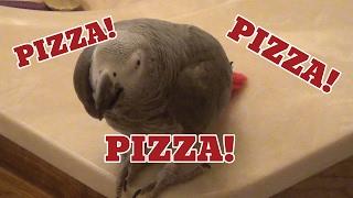 Einstein Parrot celebrates National Pizza Day!