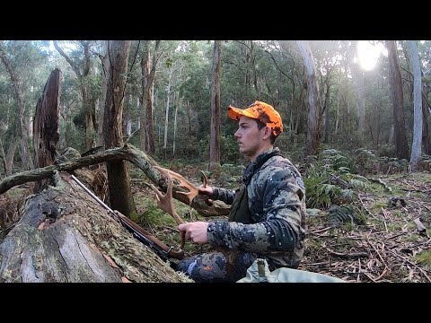 State Forest Hunt - 2019 Fallow Rut