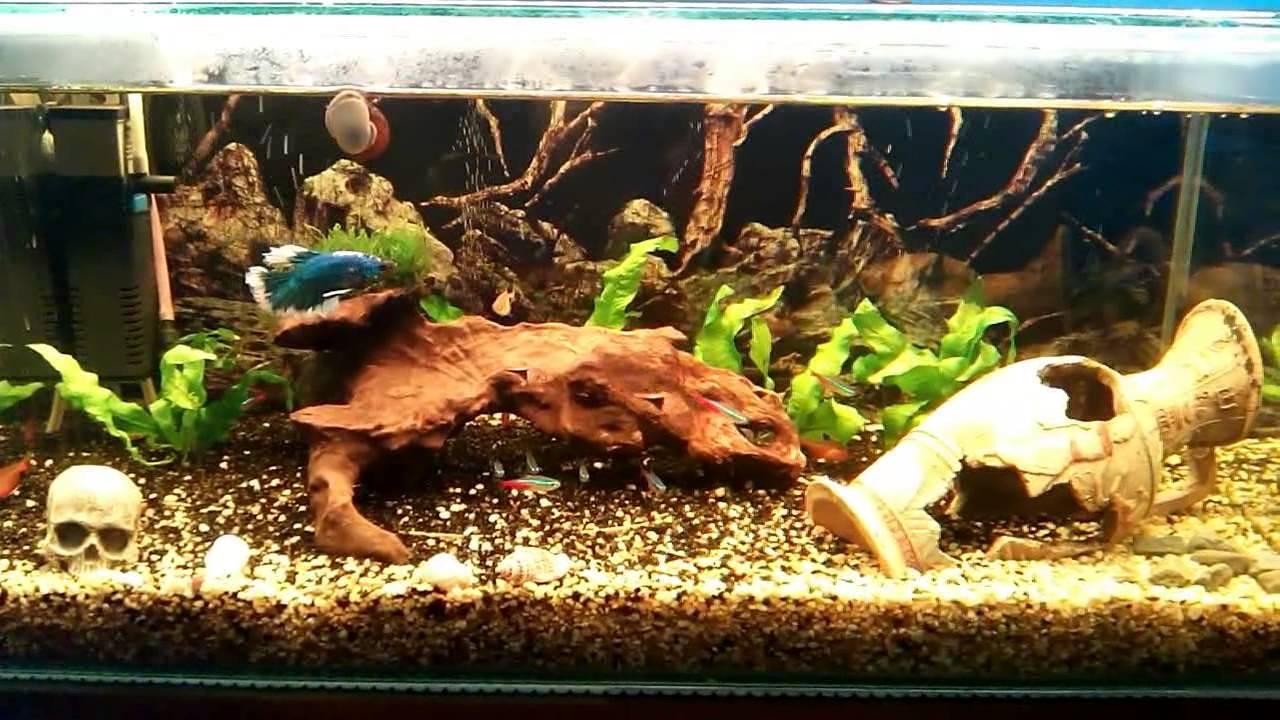 фото аквариум с корягами