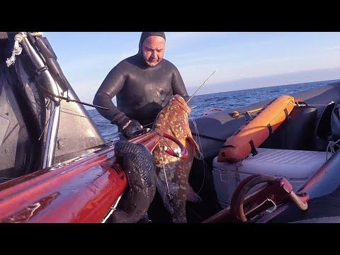 Mero De 22 Y 15 Kilos Del Pescador Javier Camacho Del Equipo Mares
