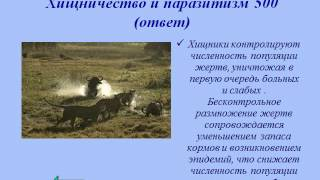 Презентация Биотические связи в природе