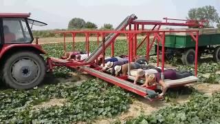 2016/ Збираня огірків лежачи у Польщі/Picking up cucumbers in Poland 2evro /Zbior ogorkow w Polsce(, 2017-07-08T13:46:15.000Z)