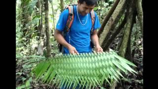 Equateur 2012 : AMAZONIE (Puerto Misahualli)