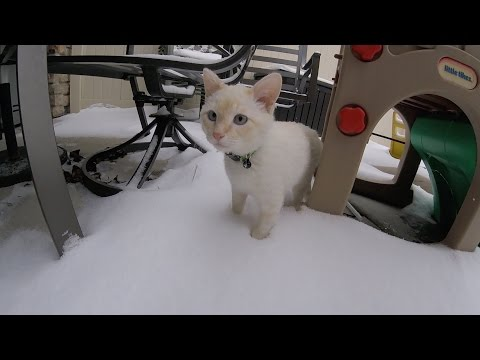 Frozen Kitten Plays In Snow