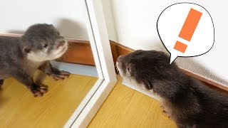 [Mirror mirror on the wall] First time Otter Bingo saw himself in the mirror