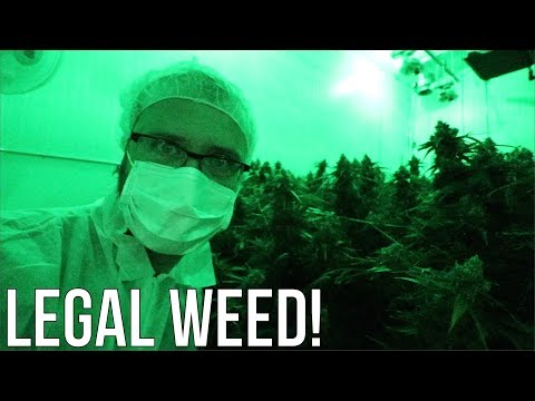 INSIDE a legal marijuana GROW OPERATION!