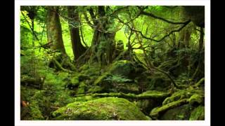 Rainforest Sounds Video