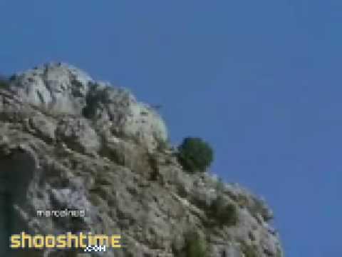 Golden Eagle Kills Goat