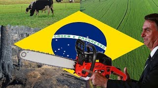 O Meio Ambiente no governo Bolsonaro (#Pirula 285)