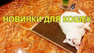 Кошачий VLOG: Когтеточка из картона отзывы , Муся и Мурз пробуют мяту