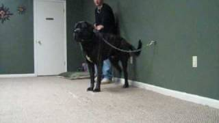 Ohio Guard Dog Bootcamp Training