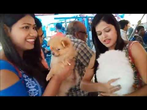 Cute Girls Get Their First Lovable Puppies At Galiff Street l Pomeranian & Samoyed