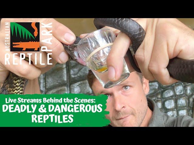 LIVE: DEADLY & DANGEROUS REPTILE SHOW WITH RANGER MICK   AUSTRALIAN REPTILE PARK